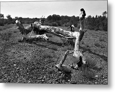 Beached Metal Print by Randal Bruck