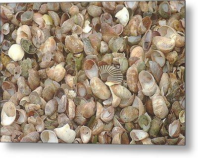 Metal Print featuring the photograph Beached Shells by Suzanne Powers