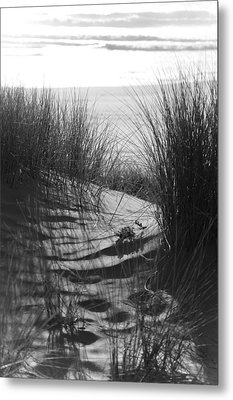 Metal Print featuring the photograph Beachgrass by Adria Trail