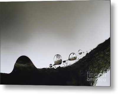 Beads Of Rain With Particles Floating Metal Print by Dan Friend