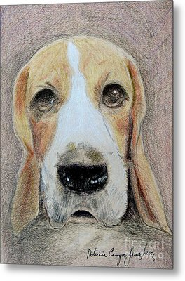 Beagle Best In Show Metal Print by Patricia Januszkiewicz