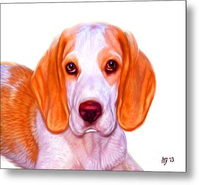 Beagle Dog On White Background Metal Print by Iain McDonald