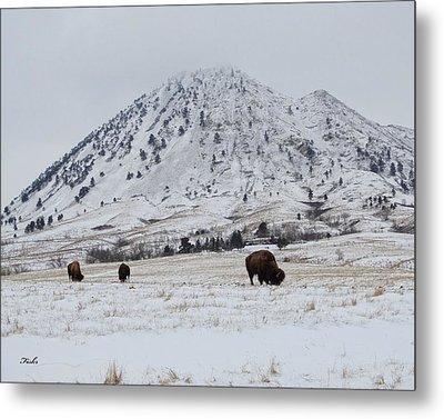 Bear Butte Buffalo Metal Print
