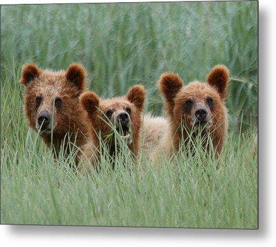 Bear Cubs Peeking Out Metal Print