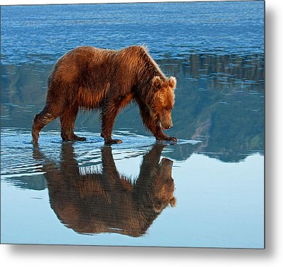 Bear Of A Reflection 8x10 Metal Print