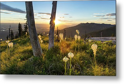 Beargrass At Sunset In The Swan Range Metal Print by Chuck Haney