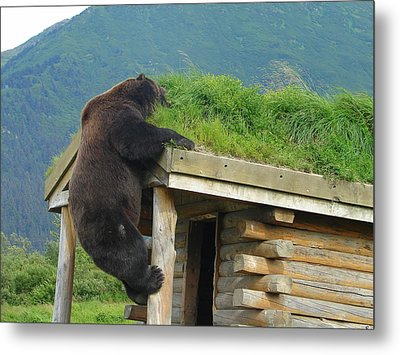 Bearly Able Metal Print by Lew Davis