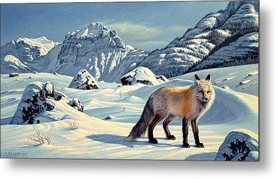 Beartooth Fox Metal Print by Paul Krapf