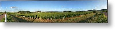 Beaujolais Vineyard, Jully-les-buxy Metal Print by Panoramic Images
