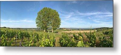 Beaujolais Vineyard, Montagny Metal Print by Panoramic Images