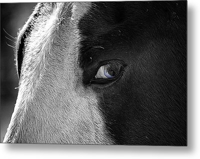 Beautiful Blind Soul Horse Metal Print by Peggy Franz