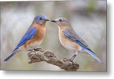 Beautiful Bluebirds Metal Print by Bonnie Barry