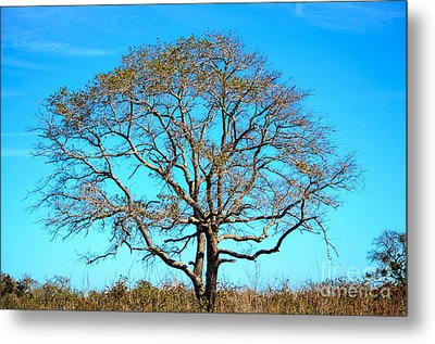Metal Print featuring the photograph Beautiful Branching by Debra Martz
