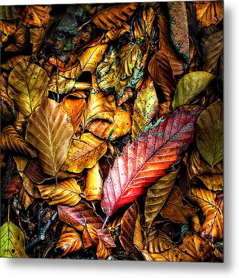 Metal Print featuring the photograph Beautiful Fall Color by Meirion Matthias