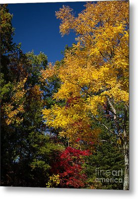 Beautiful Fall Metal Print by Dale Nelson