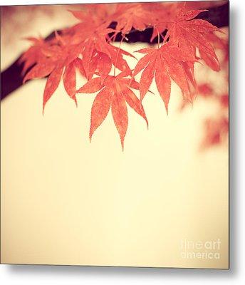 Beautiful Fall Metal Print by Hannes Cmarits