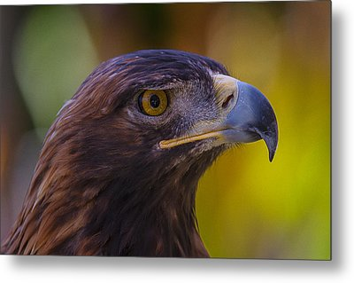 Beautiful Golden Eagle Metal Print by Garry Gay