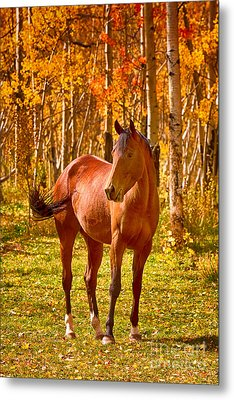 Beautiful Horse In The Autumn Aspen Colors Metal Print by James BO  Insogna
