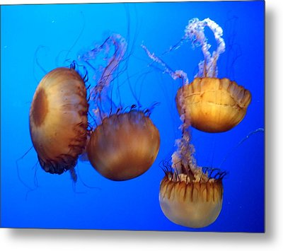 Metal Print featuring the photograph Beautiful Jellyfish by Janice Spivey