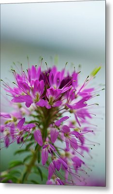 Metal Print featuring the photograph Beautiful Morning by Kevin Bone