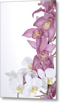 Beautiful Orchid Pink Metal Print by Boon Mee