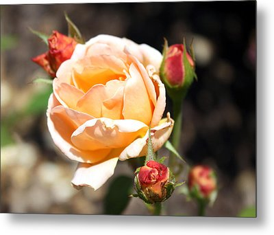 Metal Print featuring the photograph Beautiful Peach Orange Rose by Ellen Tully