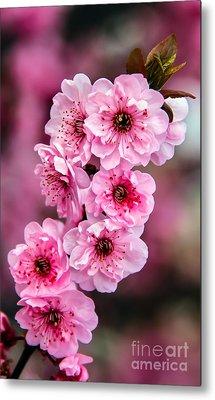 Beautiful Pink Blossoms Metal Print by Robert Bales