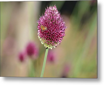 Beautiful Pink Flower With Bee Metal Print