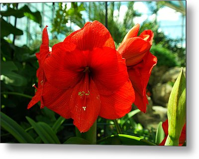 Beautiful Red Blossoms Metal Print by Jeff Swan