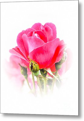 Metal Print featuring the photograph Beautiful Rose by Anita Oakley