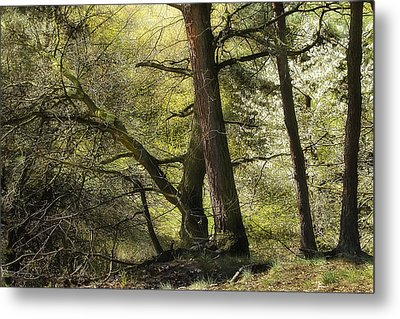 Beautiful Spring Trees Metal Print