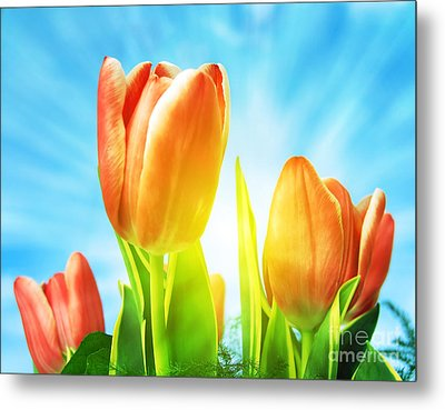 Beautiful Spring Tulips Background Metal Print by Michal Bednarek