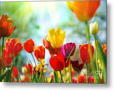 Beautiful Spring Tulips Metal Print by Boon Mee
