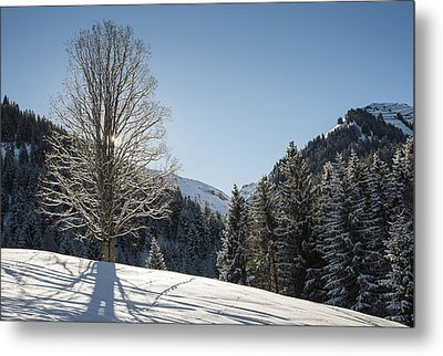 Beautiful Tree In Snowy Landscape On A Sunny Winter Day Metal Print by Matthias Hauser