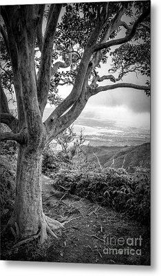 Beautiful Tree Looking Down On A Tropical Valley Metal Print by Edward Fielding