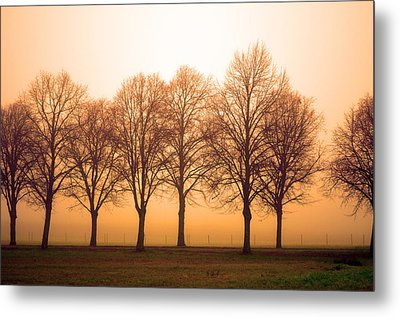 Beautiful Trees In The Fall Metal Print by Tommytechno Sweden
