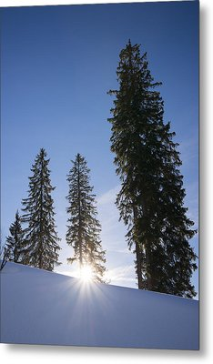 Beautiful Trees On A Sunny Winter Day Metal Print by Matthias Hauser