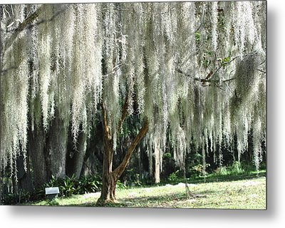 Metal Print featuring the photograph Beautiful White Spanish Moss Hanging From Trees by Jodi Terracina
