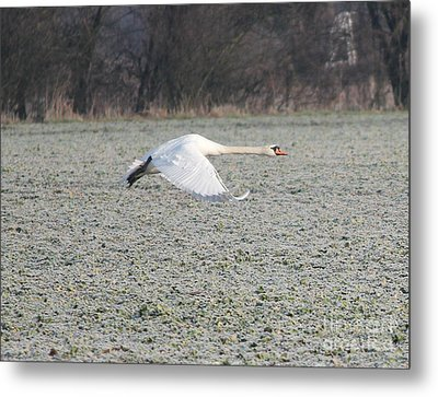 Beautiful Wild Geese Metal Print