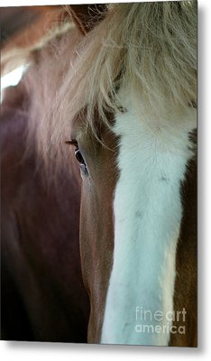 Metal Print featuring the photograph Beautiful Within Him Was The Spirit - 1 by Linda Shafer