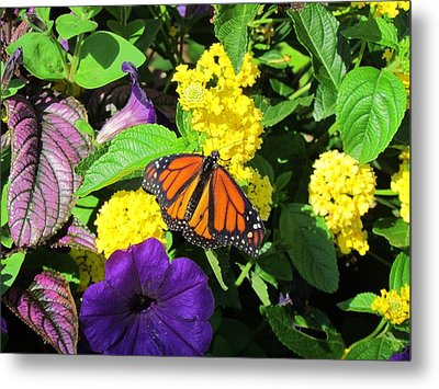 Metal Print featuring the photograph Beauty All Around by Cynthia Guinn