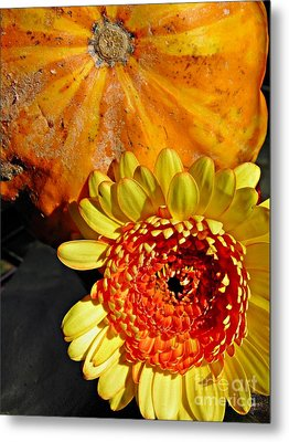 Beauty And The Squash 2 Metal Print by Sarah Loft