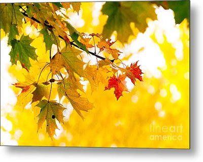 beauty Autumn Leaves Metal Print by Boon Mee