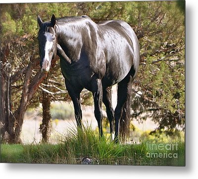 Metal Print featuring the photograph Beauty by Barbara Dudley
