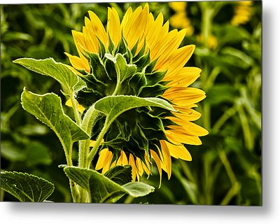Beauty From The Back Metal Print by Christi Kraft