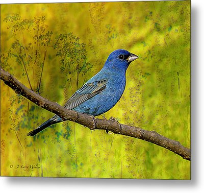 Metal Print featuring the digital art Beauty In Nature - Indigo Bunting by J Larry Walker