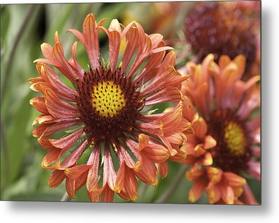 Beauty In Red Metal Print by John Holloway