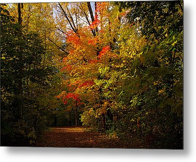 Beauty In The Woods Metal Print by Jocelyne Choquette