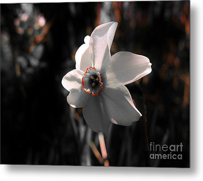 Metal Print featuring the photograph Beauty In The Woods by Sherman Perry