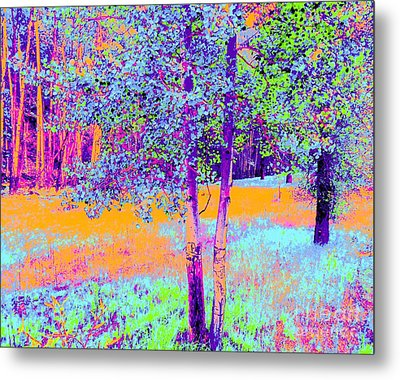 Beauty Of An Aspen Grove Metal Print by Ann Johndro-Collins